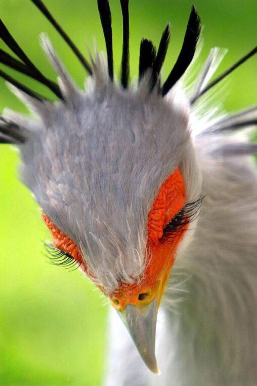 【朗報】美人な鳥、見つかる!