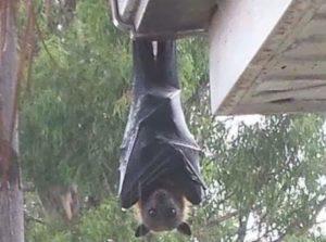 【懐かし画像】このイケメンコウモリでか過ぎワロタwww