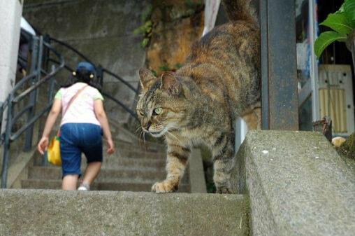 【ビックキャット!】巨大ネコ、現れる