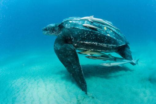【閲覧注意】海の生き物最強ランキングBEST15www