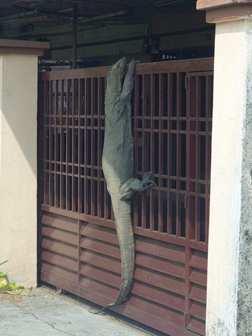【ココ日本?】家帰ったら玄関にこんなのいてワロタ