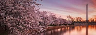 【勘違いするな!】日本には四季があるから←えっ海外にもあるけど?