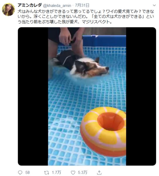 【疑問!】全ての犬が「犬かき」をできる訳ではなかった泳げない犬だっているんです!