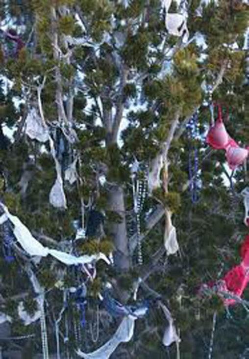 【夢】ブラジルにある、ブラジャーやパンティがたくさん吊るしてある木