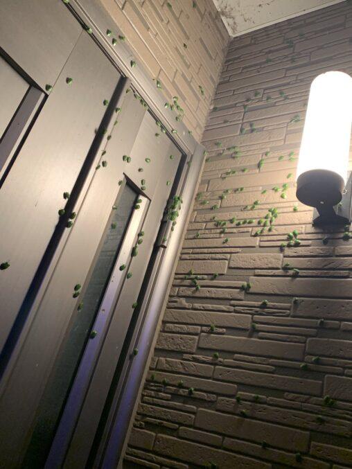 【対策でカマキリ放て!】玄関のカメムシがやばすぎるんだが