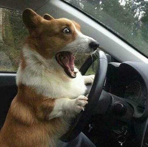 【煽りーヌ?】イッヌ、うっかり交通事故を起こしてしまう…