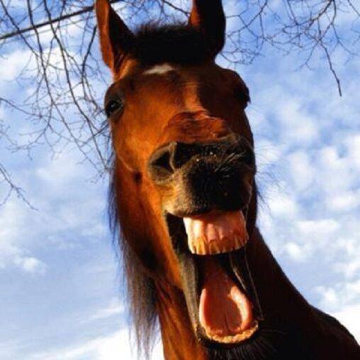 【イーッてして!】馬の歯を磨くだけで月収120万円