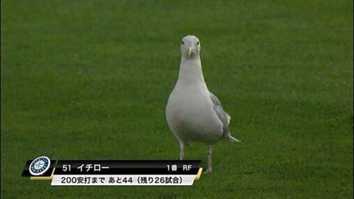 【逮捕しろ!】鳥さん、ポテトチップスを万引きしてしまうw