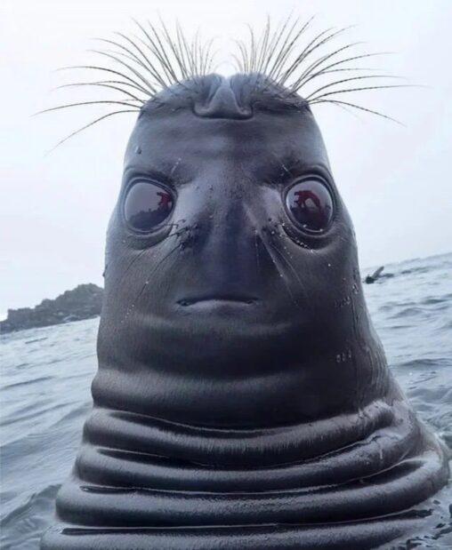 【テラフォーマーかな】アシカ?海底人?謎の人形生物海で目撃される