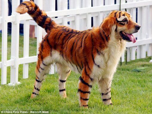 【日本にも虹色のひよこが居たらしい】中国での遺伝子組み換えペットが人気に