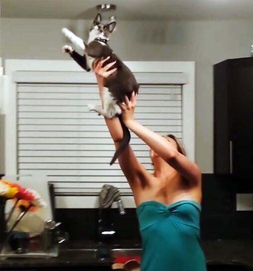 【レディー蛾が】蛾が部屋に入ってきた女性がパニック / 猫を使って駆除をする