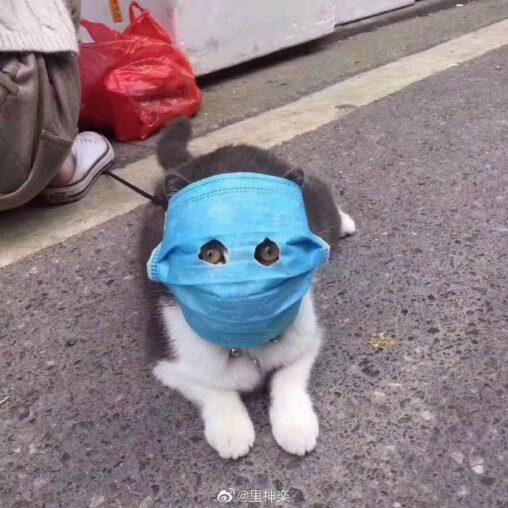 【13日の猫曜日】中国人のこういうとこすこ、マスク猫あらわる北京