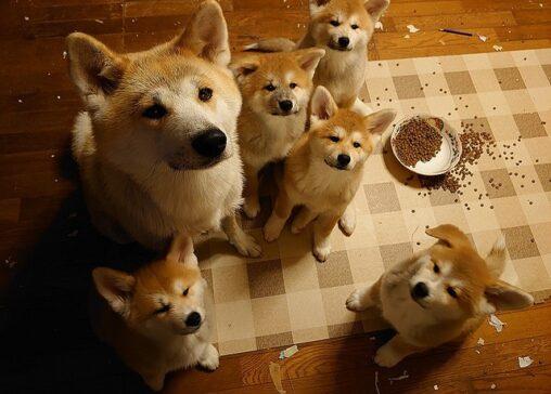 【(´・ω・`)】しょぼーん、いたずらをした犬の親子の表情が可愛い