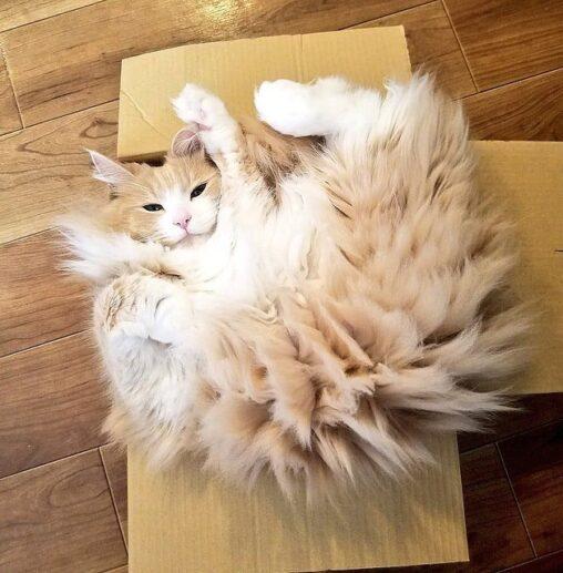 【サンダース好き】この猫、でんきタイプじゃね…? 静電気でスパークした姿がポケモンみたいで尊い