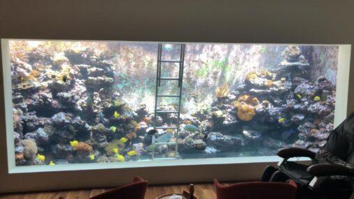【おしゃれなリビング!】水族館並みの水槽がある家に憧れるんやが