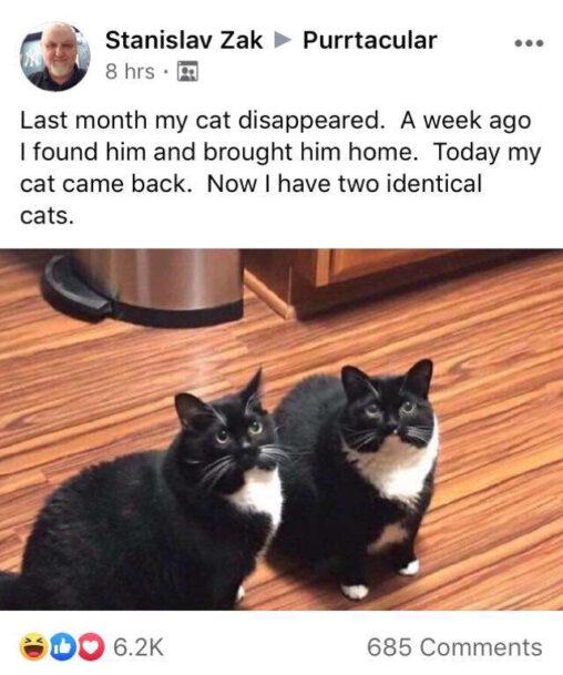 【迷子】海外おじさん、先月に猫が消えるも1週間前に見つけ連れ帰った→その後をご覧ください
