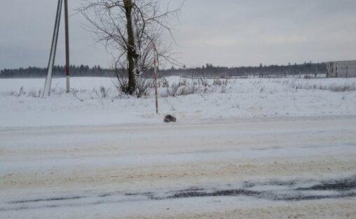 【氷漬け】ロシア人「猫が凍ってたから解凍してみたw」