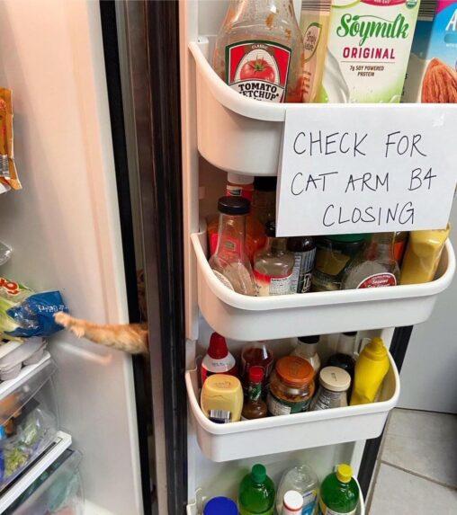 【動画あり】アメリカ人「冷蔵庫の扉閉める前に猫の手があるか見て」