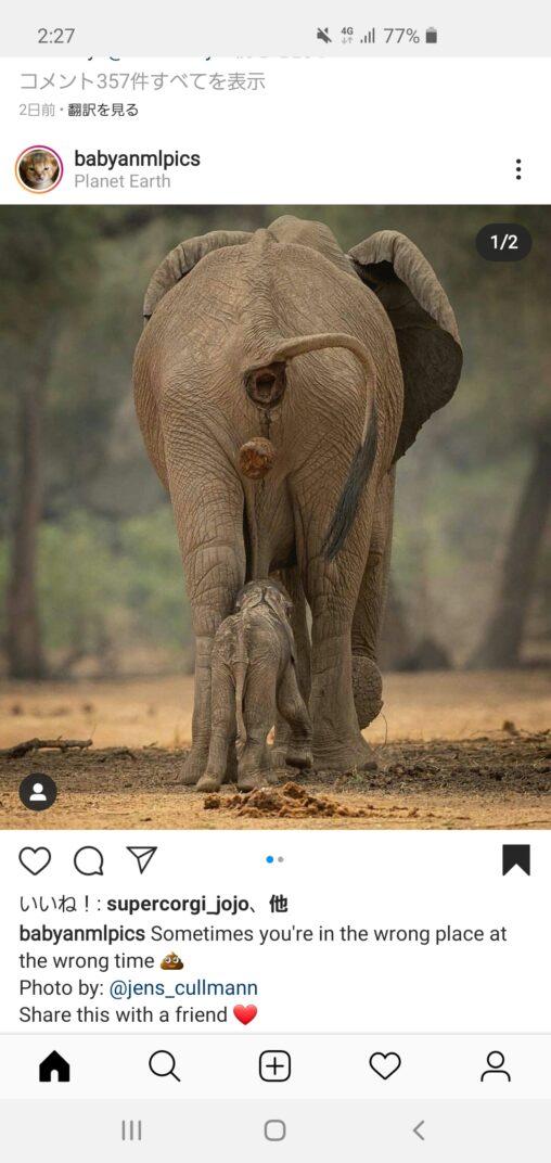 【お尻、開発済み!】象の肛門でかすぎる(ゾウのウンチは世界変える)