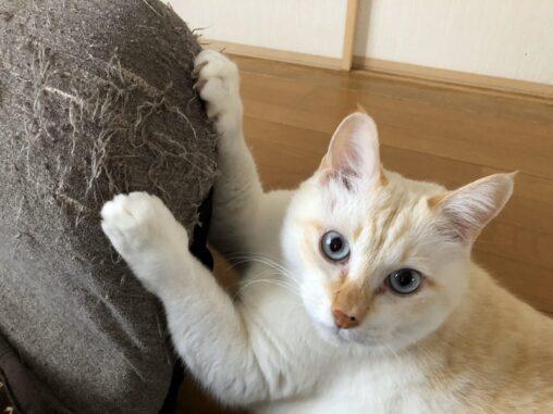 【猫にまつわる不思議なお話】「生まれ変わったらうちにおいで」→ 数日後にケガした子猫が(ぬこぬこネットワーク)