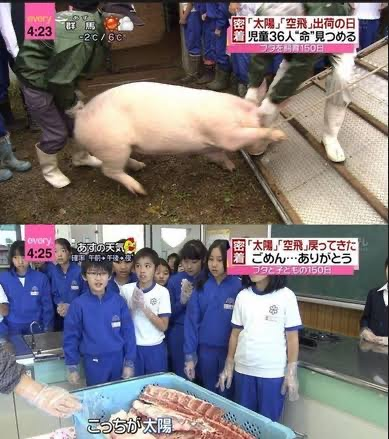 【トラウマ食べる命の授業!】小学生が育てた豚さん、無事お肉になる