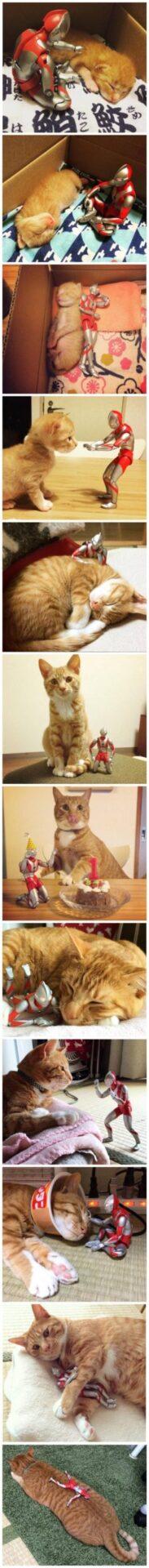 【ウルトラマンに育てられた!】猫の成長を写真に収めた結果