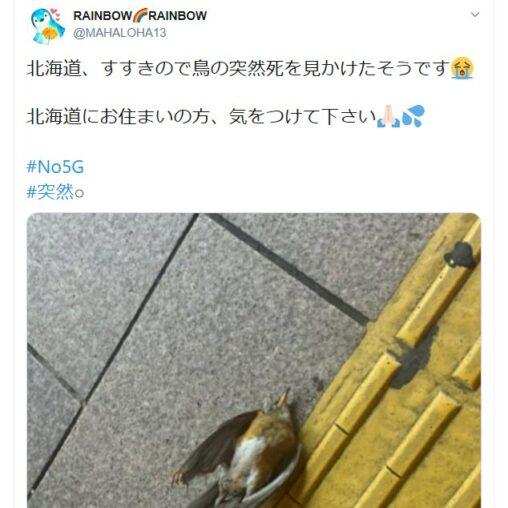 【死んだ?デマ情報!】5G電磁波が鳥さんを影響し殺してしまう(動画)