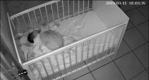 【攻撃!】猫、嫉妬のあまり人間の赤ちゃんを殺してしまう