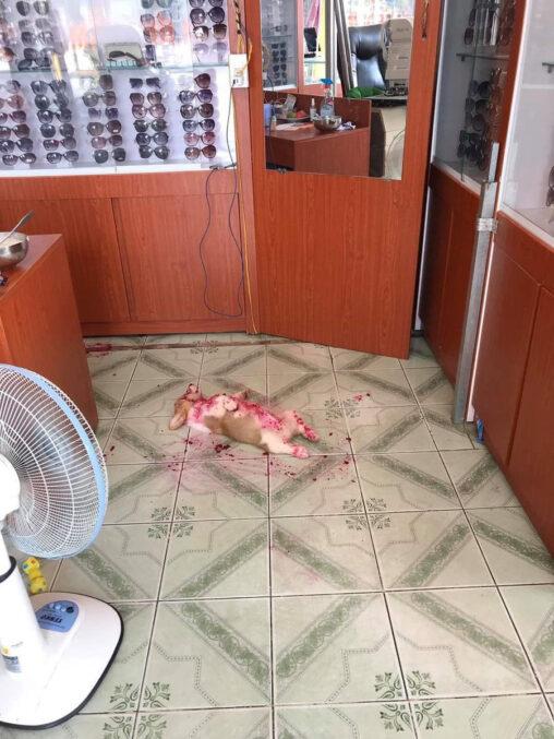 【血まみれの犬!】イッヌ、惨殺される(シーヌ)