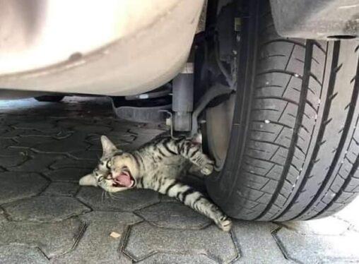 【儚い当たり屋!】駐車場の猫、轢かれる寸前でワロタ