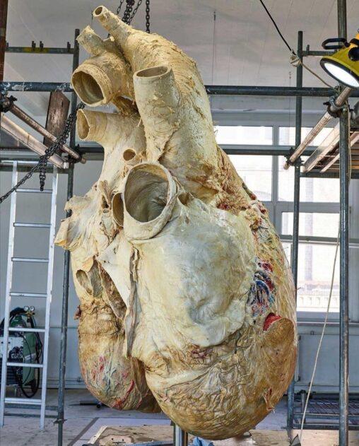 【世界最大!】シロナガスクジラの心臓でかすぎワロタ