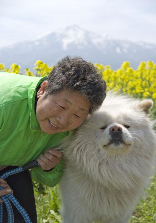 【菊谷節子さんのもとへ会いに行く!】ブサカワ秋田犬「わさお」死んだ