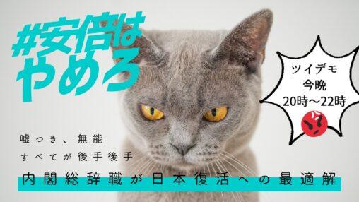 【猫が晋三に激おこ!】ネッコ、安倍ちゃんに激怒