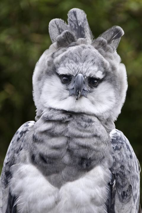 【鍵キャラ】中ボスっぽい鳥が見つかる