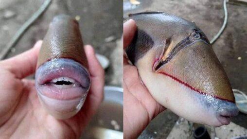 【まるで人間の口と歯だな!】キモい魚、見つかる
