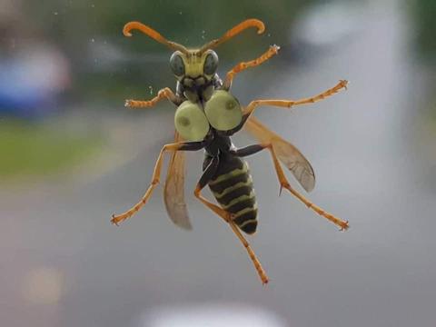 【巨乳アピール!】めちゃくちゃエッチな虫が発見される
