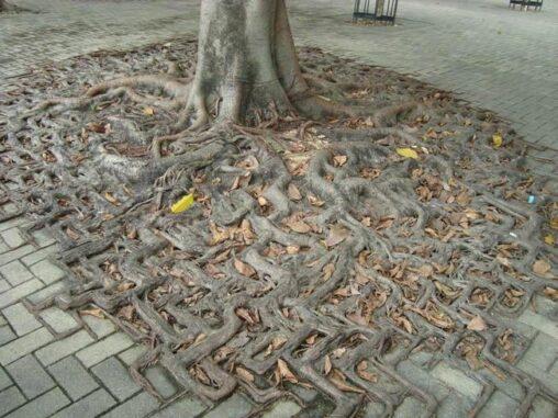 【変な形!】キモイ木が見つかる(グロ注意)