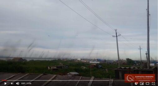 【ハンバーグ!】ロシアで蚊が大量発生。蚊柱が巨大すぎて竜巻級になる