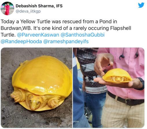 【アルビノ!】インドで発見された新種の亀