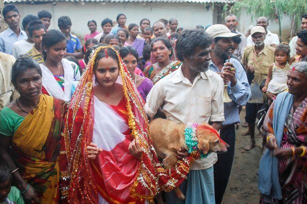 【インド!】犬と結婚させられるクソみたいな村
