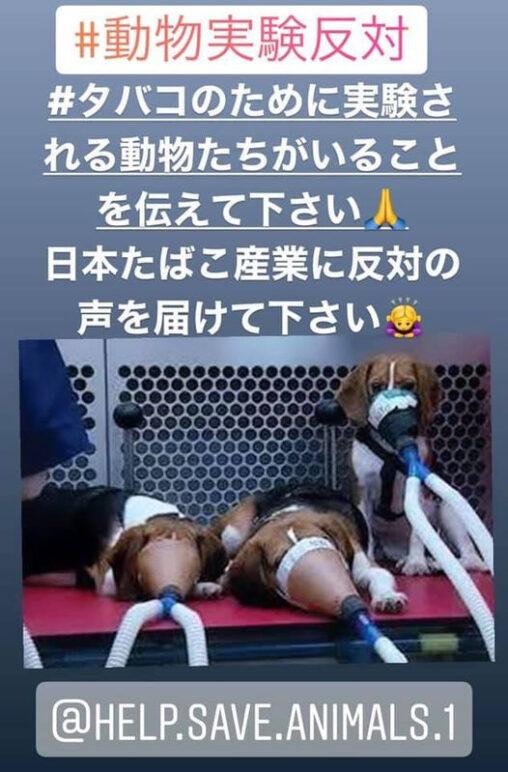 【実験】タバコの有害性を調べるために犬に吸わせてたってマジ?