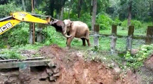 【動画】穴に落ちた象をショベルカーで救出、命の恩人だと思い象がショベルカーにお礼