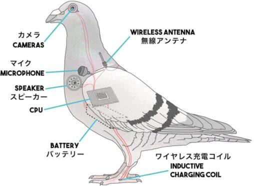 【殲滅】アメリカ人「鳥の正体は国民を監視する小型ドローンだ!本物の鳥は政府が絶滅させた!」
