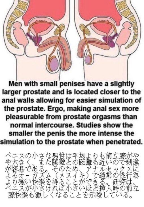 【前立腺!】ペニスの小さい男性、メスの素質があることが判明