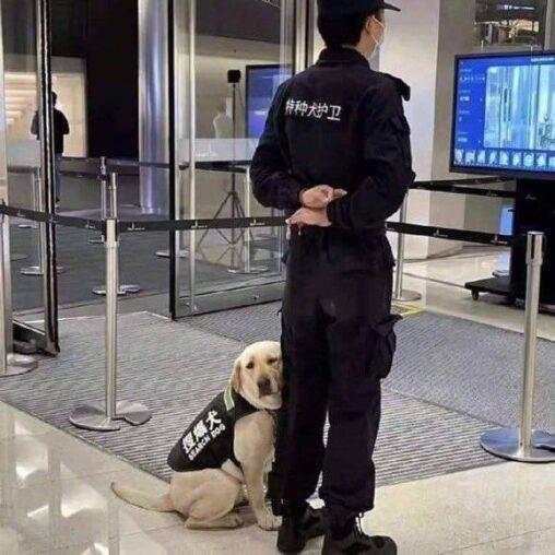 【かわいい?】まったく役に立ちそうにない警察犬が見つかる