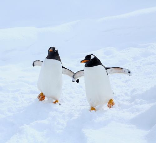 """ペンギンに""""宇宙人の可能性""""が浮上ペンギンの糞から、金星の大気中にある化学物質と同じものが発見"""